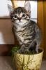 eine besondere Pflanze