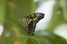 Schmetterling beim duschen