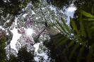 Regenwald (Sabah)
